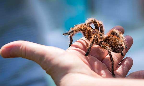ragno su mano di bimbo