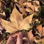foglia autunno foliage
