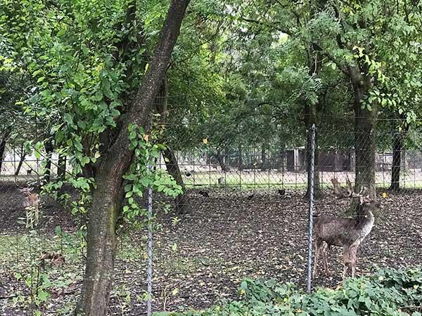 cervo parco oasi faunistica