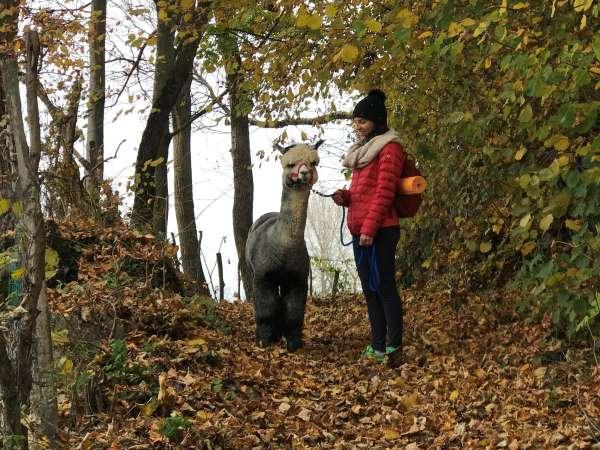 ragazza con alpaca