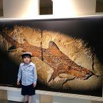 bambino al museo dei fossili