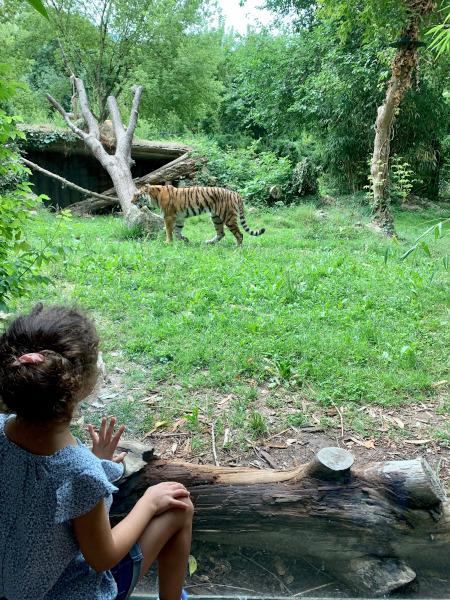 bambina che guarda tigre